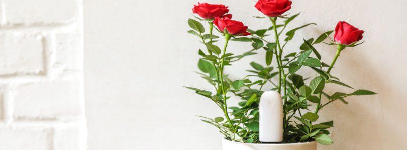 ¿Poco alcance de Mi Flora para usar en Home Assistant? Xiaomi Mi Flora Plant Sensor MQTT Client/Daemon es la solución