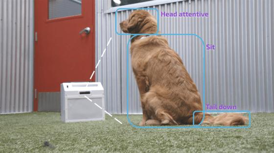 CompanionPro, un adiestrador de perros con inteligencia artificial