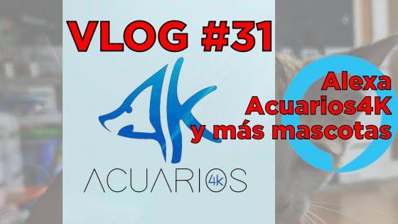 VLOG #31: Activación de Alexa y automatización para mascotas